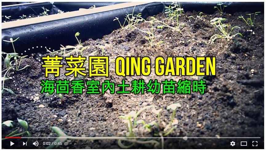 菁菜園 海茴香 幼苗縮時攝影